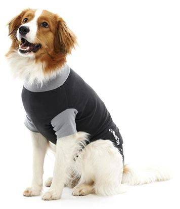 Buster Body Suit Hond
