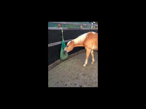 Hooinet Fijnmazig Paard