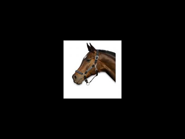 Chetaime Safety First Veiligheids Halster Pony