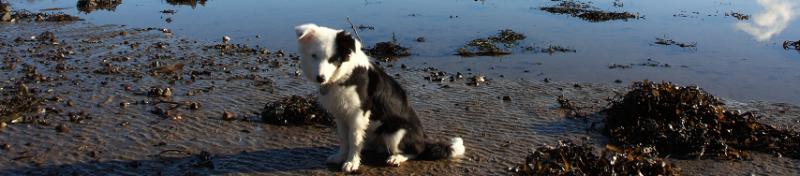 Aarde-zand-eten-hond