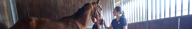 Paard-maagzweer