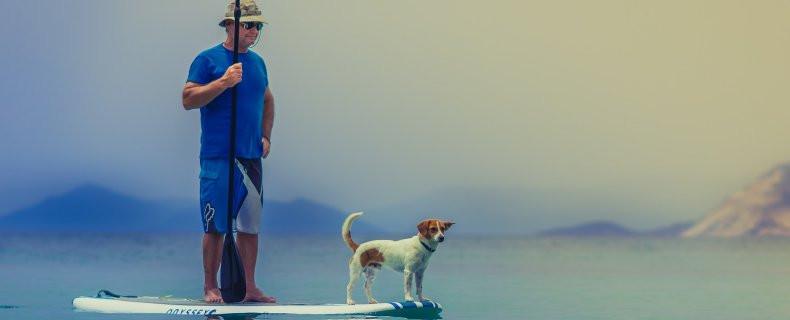huisdier-vakantie-hond-790-215-320