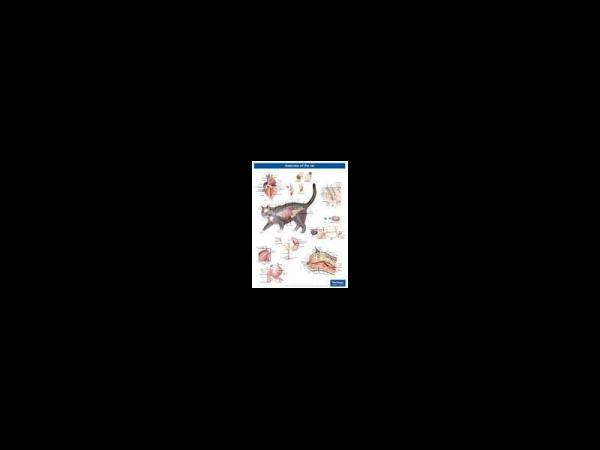 Anatomische Poster Kat