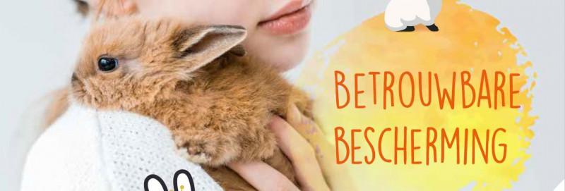Enting-konijn-3-ziektes
