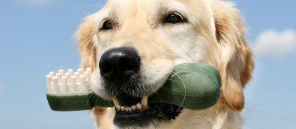 Hond-met-tandeborstel
