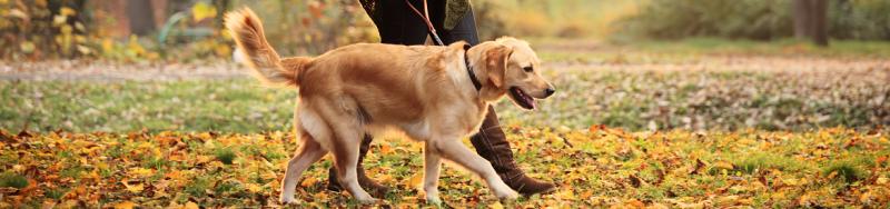 Hond-uitlaten-hoe-vaak-hoe-lang