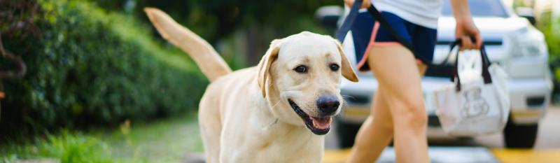 Wandelen-hond