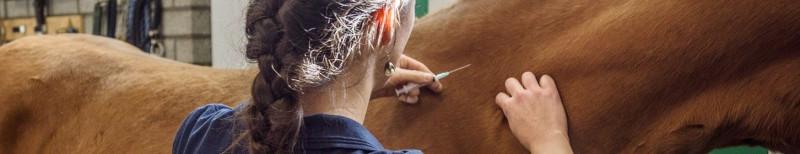 Paard-enting-dierapotheker