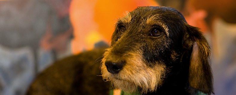 Reisziekte-wagenziekte-hond