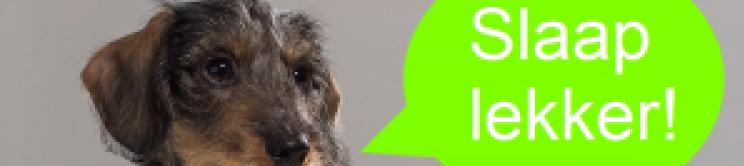 Slaap_lekker_hond-750-215-300
