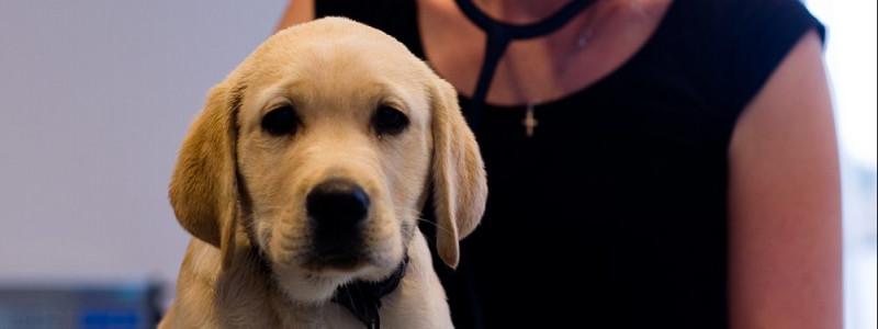 puppyvacc0b