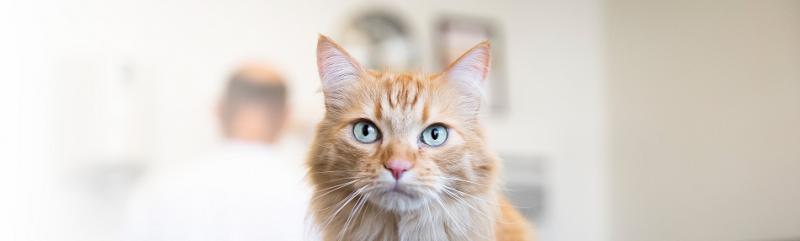 Voedselovergevoeligheid-hond-kat