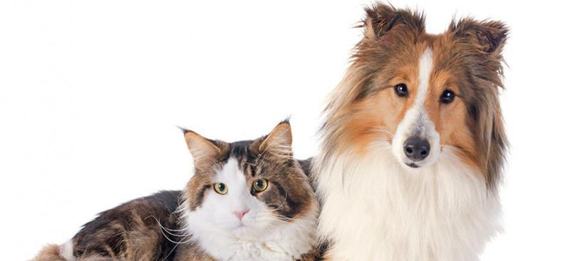 Redonyl-hond-kat