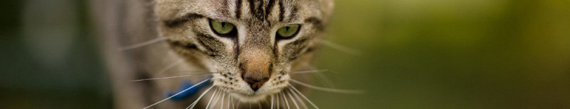 Herfsttips-kat