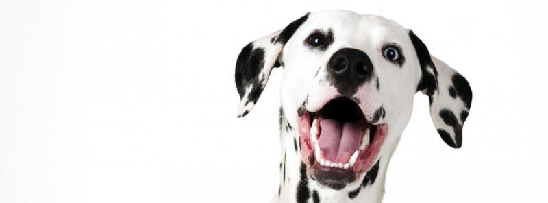Honden-gapen